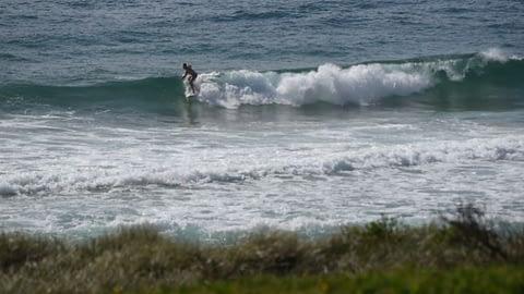 surfer Curl Curl beach