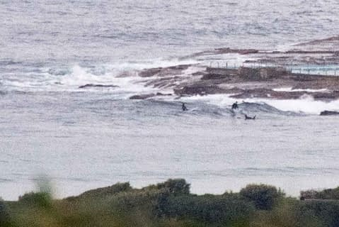 dy point surfers