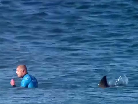 Mick Fanning and shark framegrab from youtube